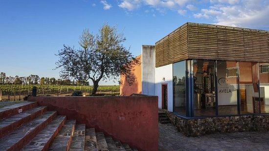 Aleria, França: Domaine Mavela