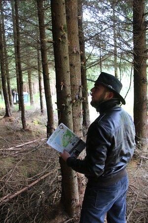 Duror, UK: Highland Titles Glencoe Woods, Glencoe