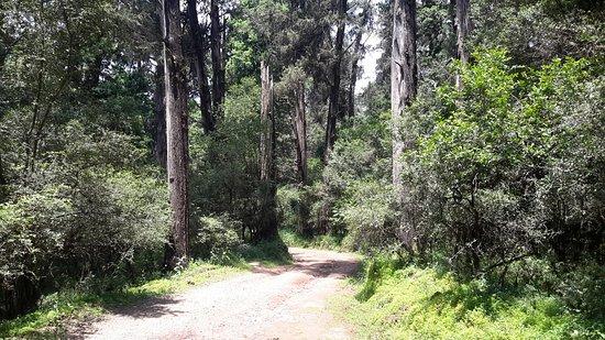 Menagesha Suba Forest Park照片
