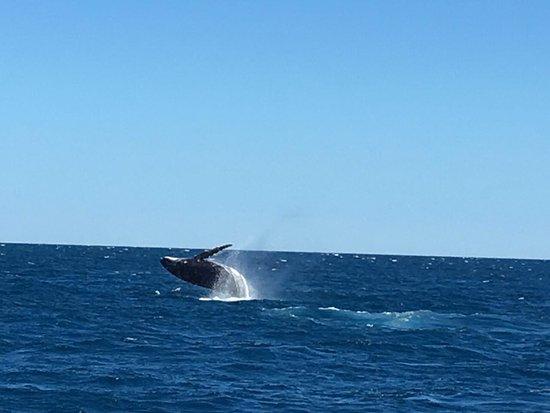 Hervey Bay, Australia: Jump