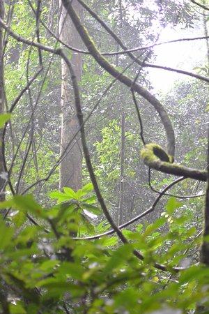 Национальный парк Марчисон-Фолз, Уганда: Views in the forest