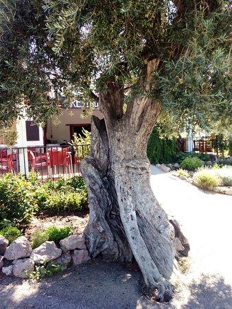 Órgiva, Spanien: En la ruta de los olivos centenarios