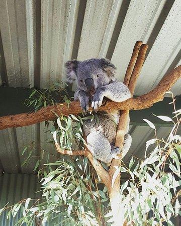 Blacktown, Australia: IMG_20160728_153913_large.jpg