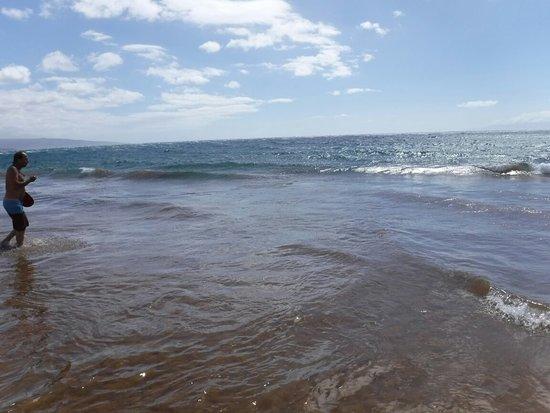 Wailea Beach: DSCF0065_large.jpg