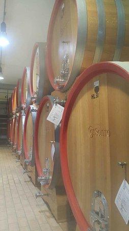 Tordandrea, Italia: Wine storage