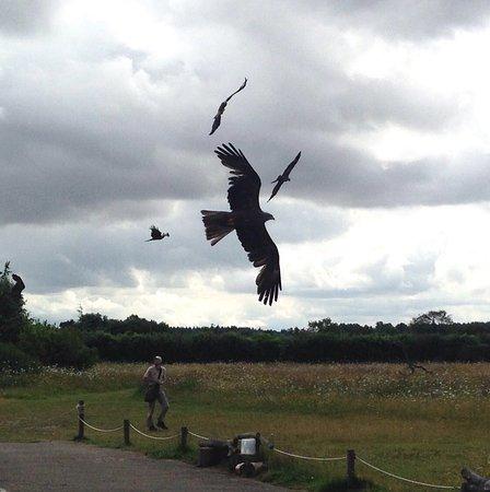 Andover, UK: photo0.jpg
