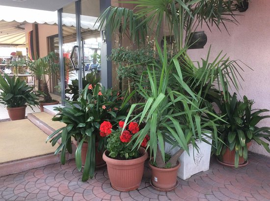 Hotel Belturismo Bellaria Igea Marina Provincia Di
