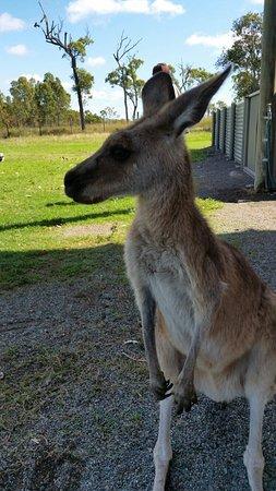 Cannonvale, Australia: 20160723_111628_large.jpg