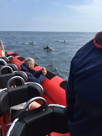 St Davids, UK: Dolphins on our offshore trip