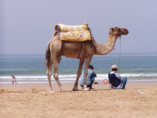 Morroco Nomade Dream