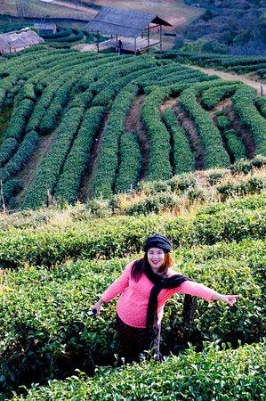 Fang City, تايلاند: ไร่ชาแปลง2000