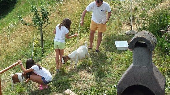 Poljane nad Skofjo Loko, Eslovênia: Dar da mangiare alle caprette