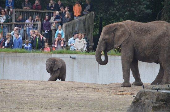Beekse Bergen Safari Park: olifantenverblijf