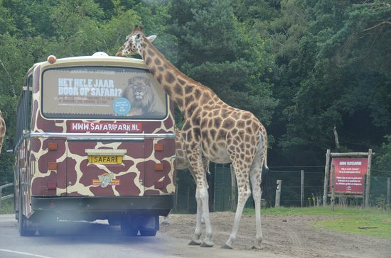 Beekse Bergen Safari Park: bussafari