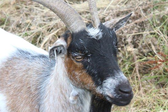 Hertford, UK: See the animals