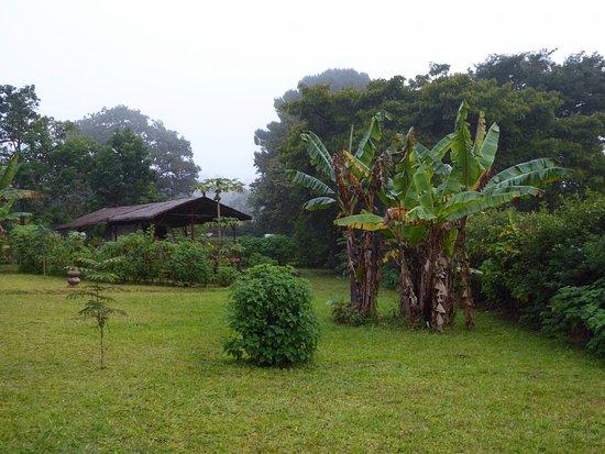 Mzuzu صورة فوتوغرافية