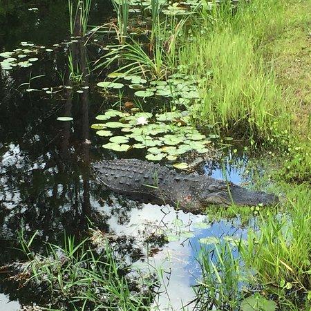 Okefenokee Swamp Park Tours