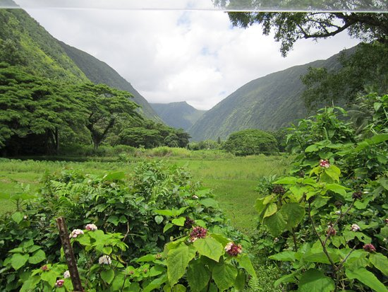Kukuihaele, HI: the mountains in the valley