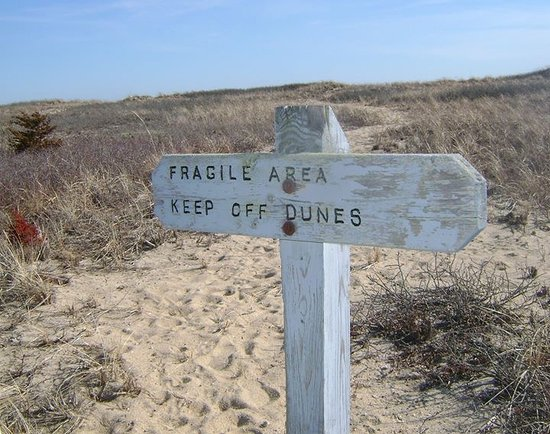 Mashpee, MA: Dunes at South Cape Beach