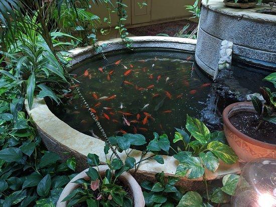 Hotel Mitzpe Hayamim: בריכת דגים בפטיו המלון