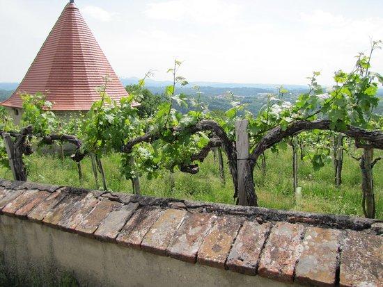 Riegersburg: Weingarten neben dem Burgweg