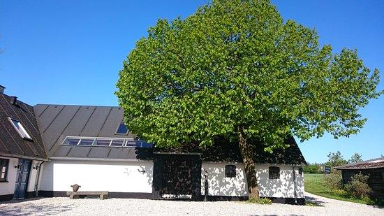 Thisted, Dinamarca: Galleri Salshus