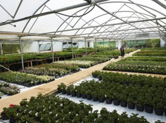 Chipping Norton, UK: Many of the plants we sell are grown on-site, with everything from herbs and vegetables to flowe