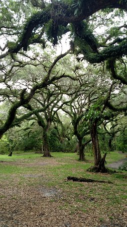 Davie, FL: Trail