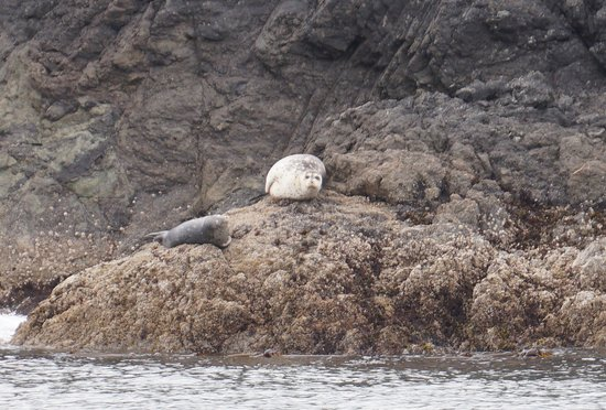 Port Townsend, Etat de Washington : Seals