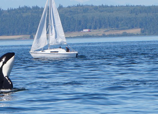 Port Townsend, Etat de Washington : Saying 'hello'