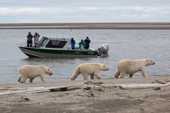 Kaktovik, Аляска: Polar bear viewing from Nanuq boat
