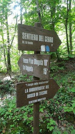 写真Parco Naturale Del Bosco Di Tecchie枚