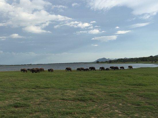 Habarana, Sri Lanka: photo3.jpg