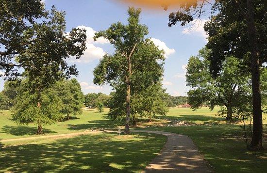 Ballard Park: love the trees