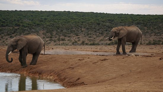 Addo Elephant National Park, แอฟริกาใต้: Eine Elefantenfamilie an der Wasserstelle