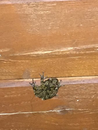 Holly Lake Campsites : Small but very loud Frogs will be visible