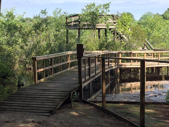 """Millsboro, DE: Had these """"Nature observation Towers"""" you can see all types of duck geese fish"""