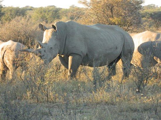 Serowe, بوتسوانا: Experience the wonder of seeing this beautiful animals