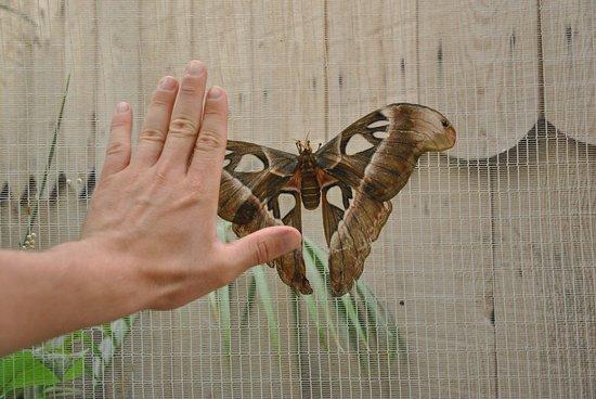 Velleron, Francja: Papillon dont j'ignore le nom de très grande taille