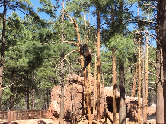 Peoria, Arizona: Size Matters ATV UTV Rentals & Tours, LLC