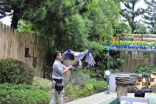 Davao City, Filipinler: Big bird