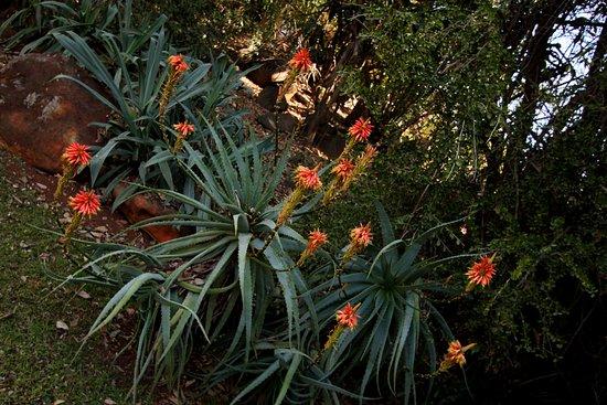 Drifters Johannesburg Lodge: Zahrada krásná!
