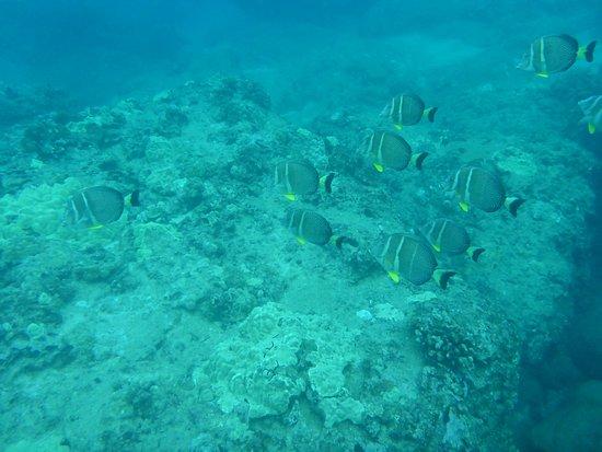 Sharks Cove Rentals ภาพถ่าย