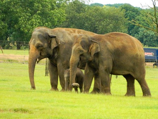 Dunstable, UK : The baby elephant was onlly 2 weeks old