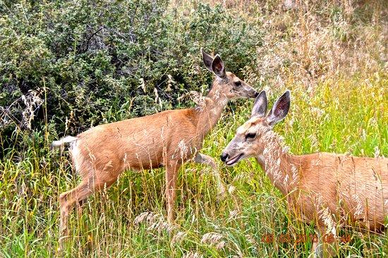 Golden, Колорадо: Wild life on Lookout Mt. road
