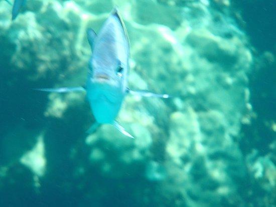 Great Guana Cay: photo4.jpg