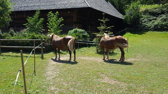 Gutach im Schwarzwald, ألمانيا: 20160726_134511_large.jpg