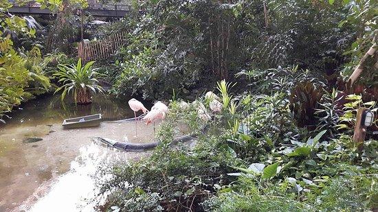 Tropical Islands: Er 'wonen' flamingo's in het resort