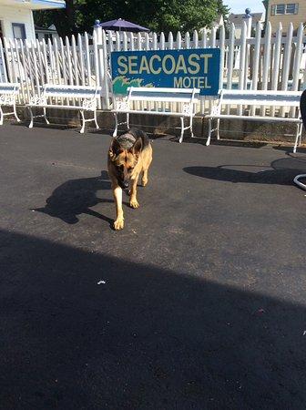 Seacoast Motel Photo