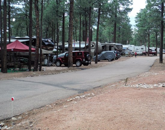 Overgaard, AZ: Camping among the Tall Pines